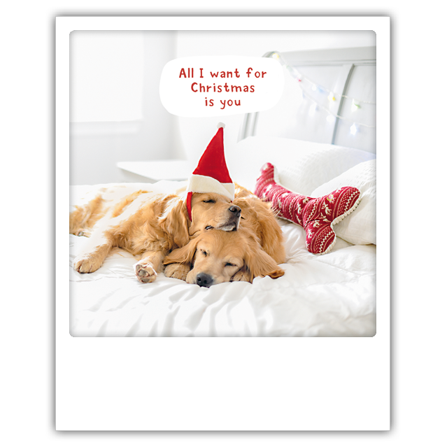 "Photo-Postkarte ""All I want dogs""- XM-0212-EN - Pickmotion (Xmas)"