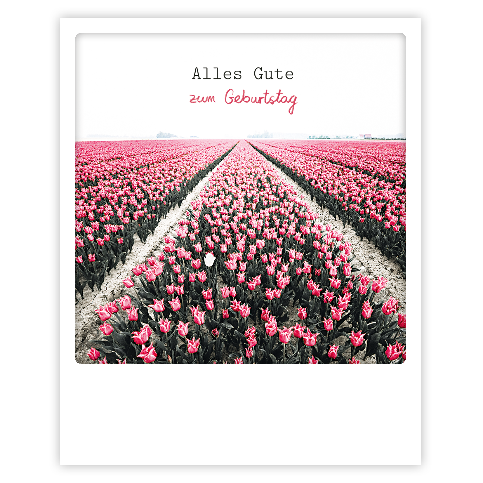"Photo-Postkarte ""Zum Geburtstag"" - ZG 0786 - DE - Pickmotion"