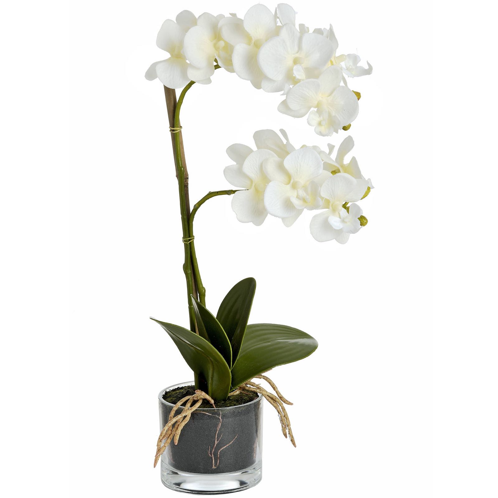 Small white everlasting orchid with glass 53 cm