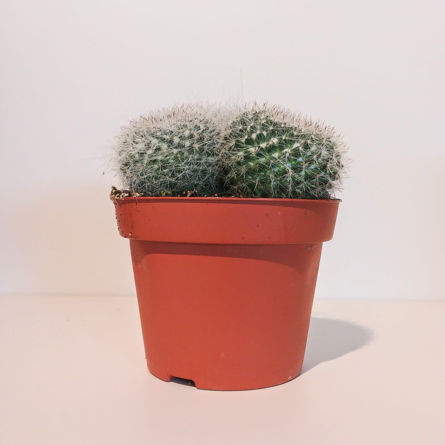 London House Plants Small Cactus