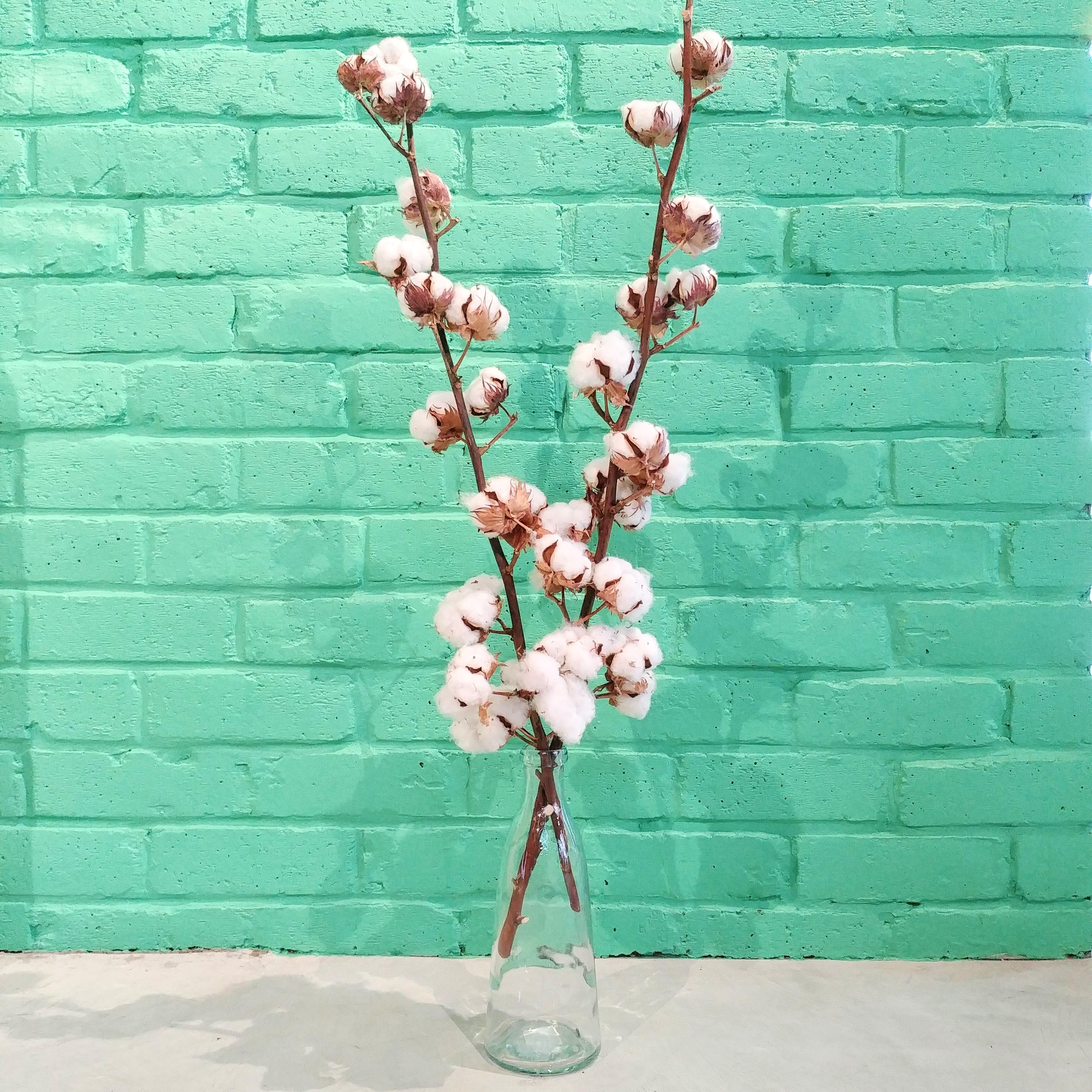 The Dried Flower Shop Cotton Stems (x 2)