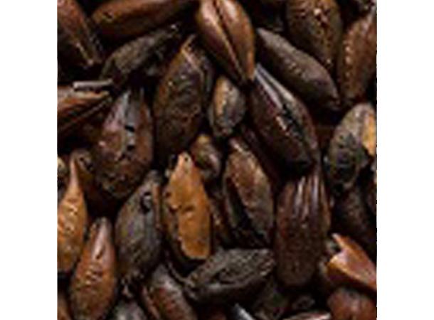 Castle Malting Chocolate 1000 EBC