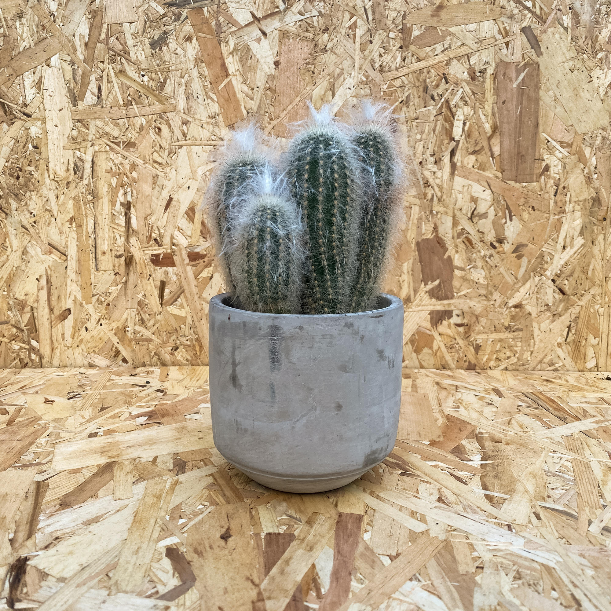 Bauplan Cache Pot