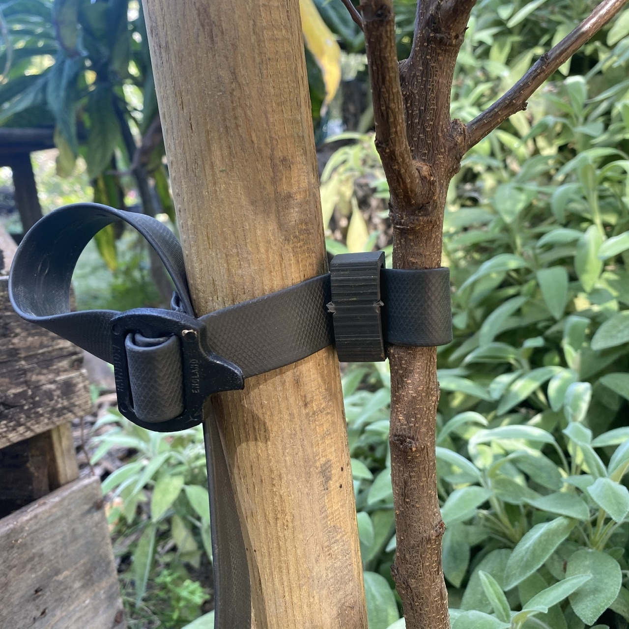 Rubber Tree Ties