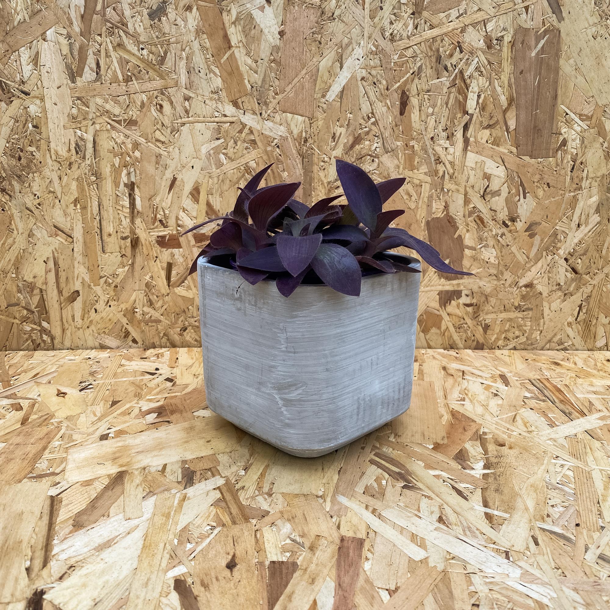 Bacca Cache Pot