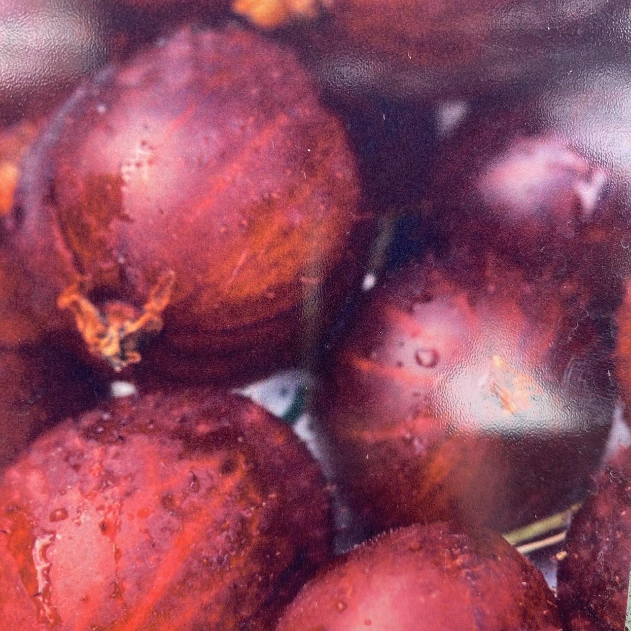 Josta Berry - Ribes nidigrolaria 'Josta'