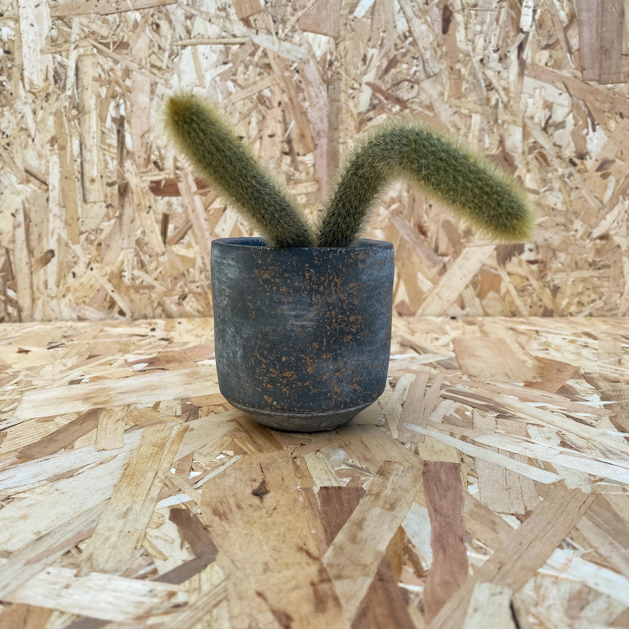 Boreal Cache Pot