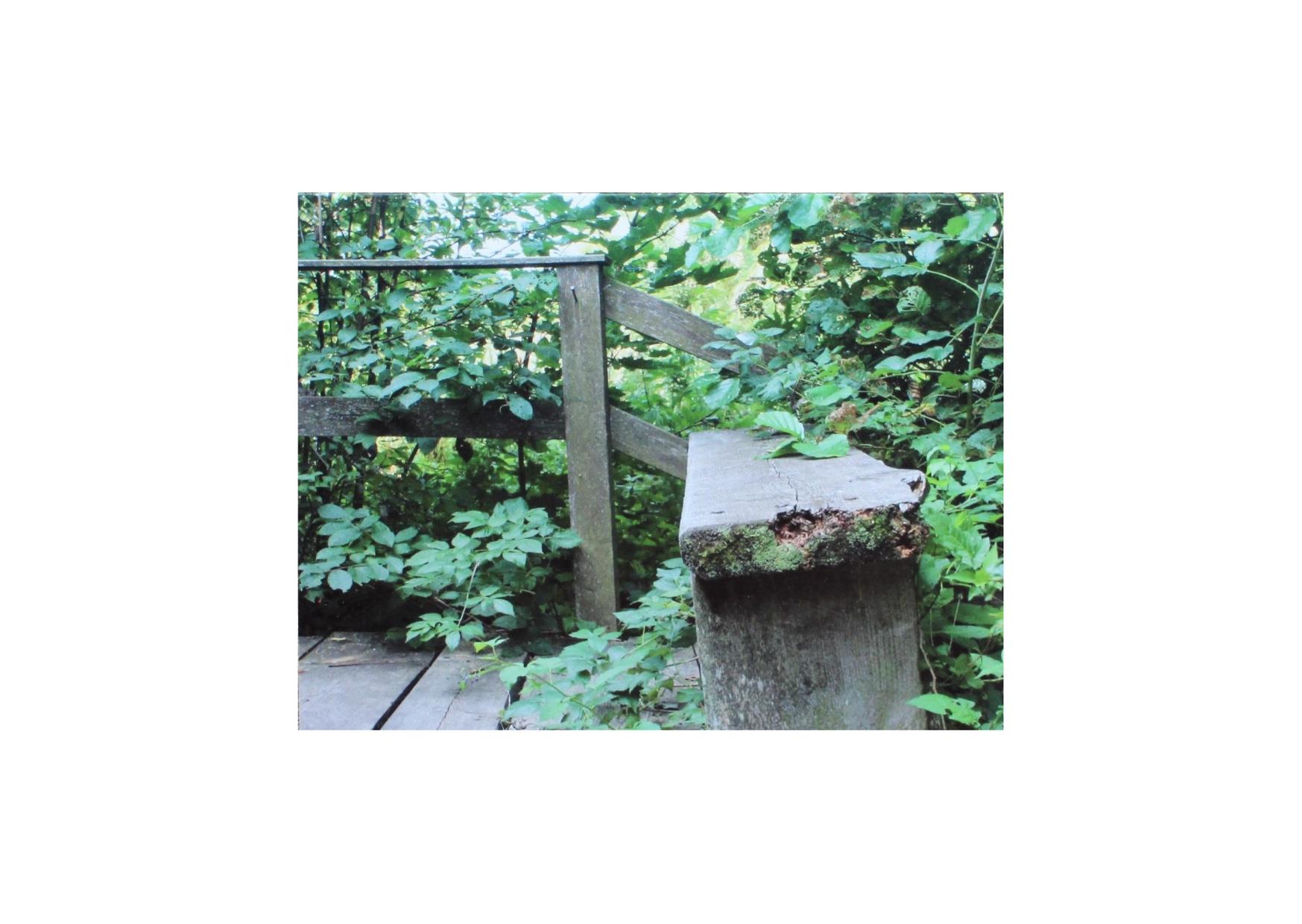 Metsän kätköihin -runokortti 002