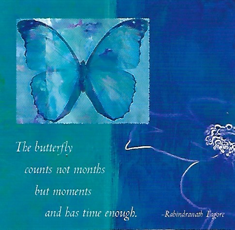 The Butterfly Counts Not Months But Moments - Magnet
