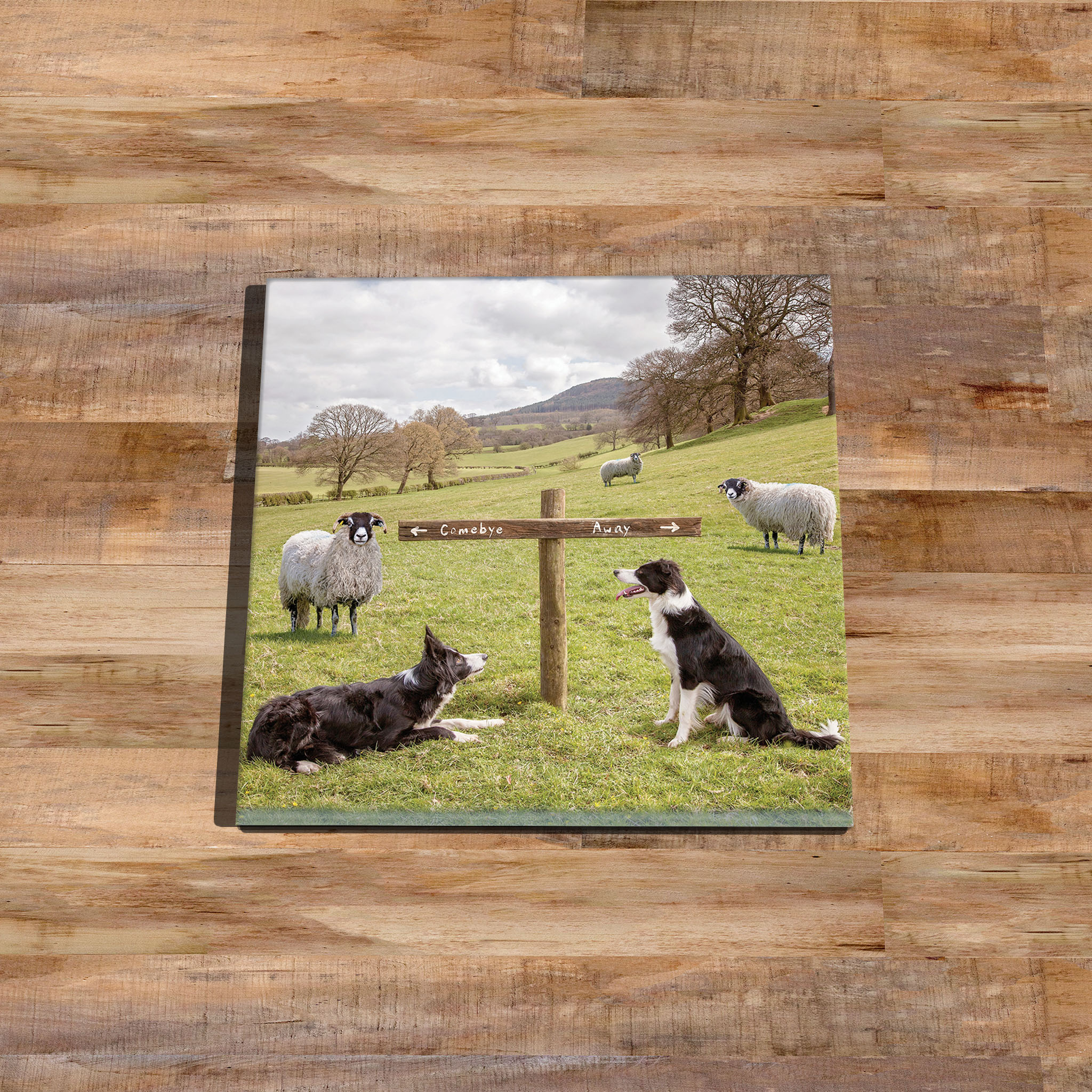 At the Crossroads - Sheepdog Glass Drinks Coaster - Kitchy & Co