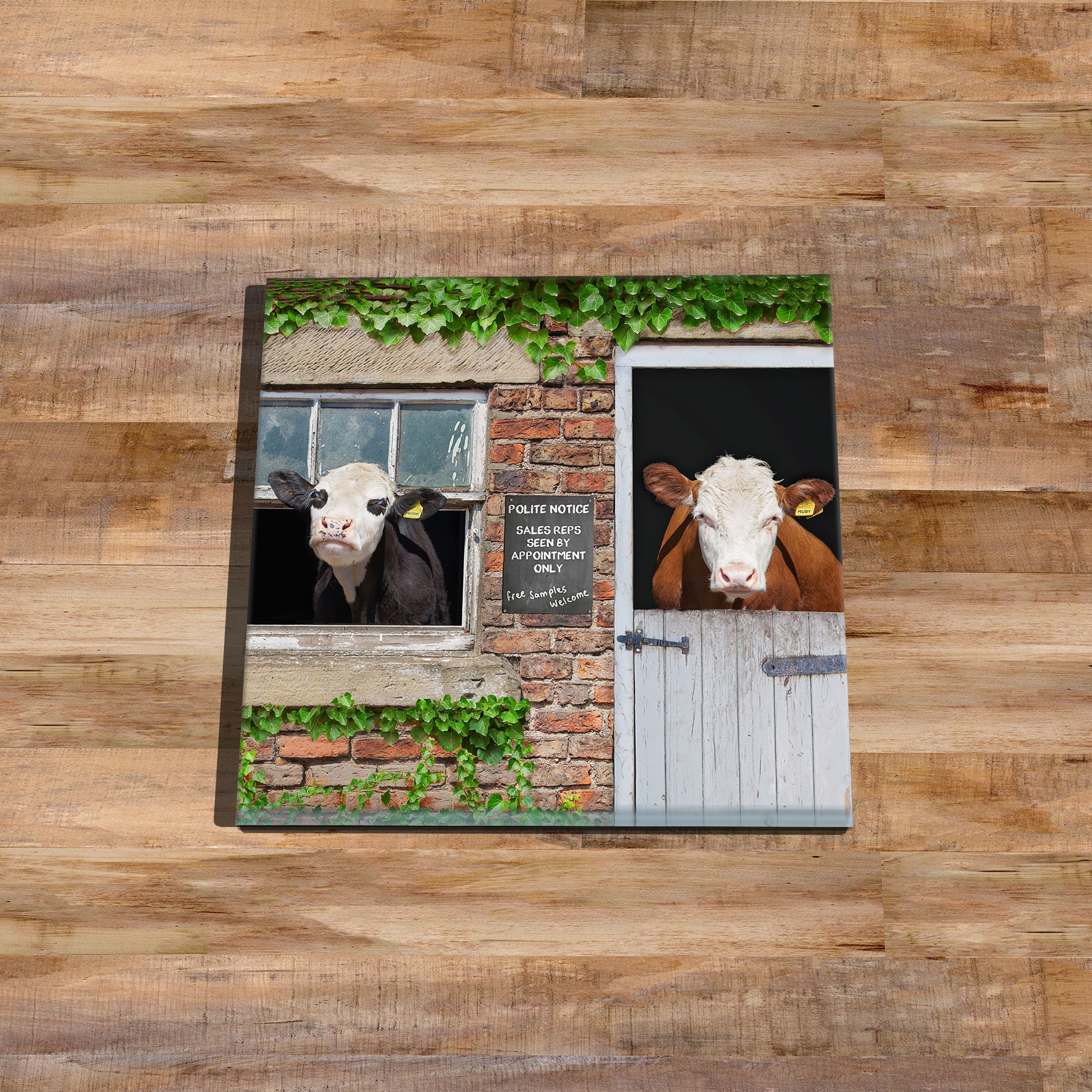 Cows Morning Chat - Glass Drinks Coaster - Kitchy & Co
