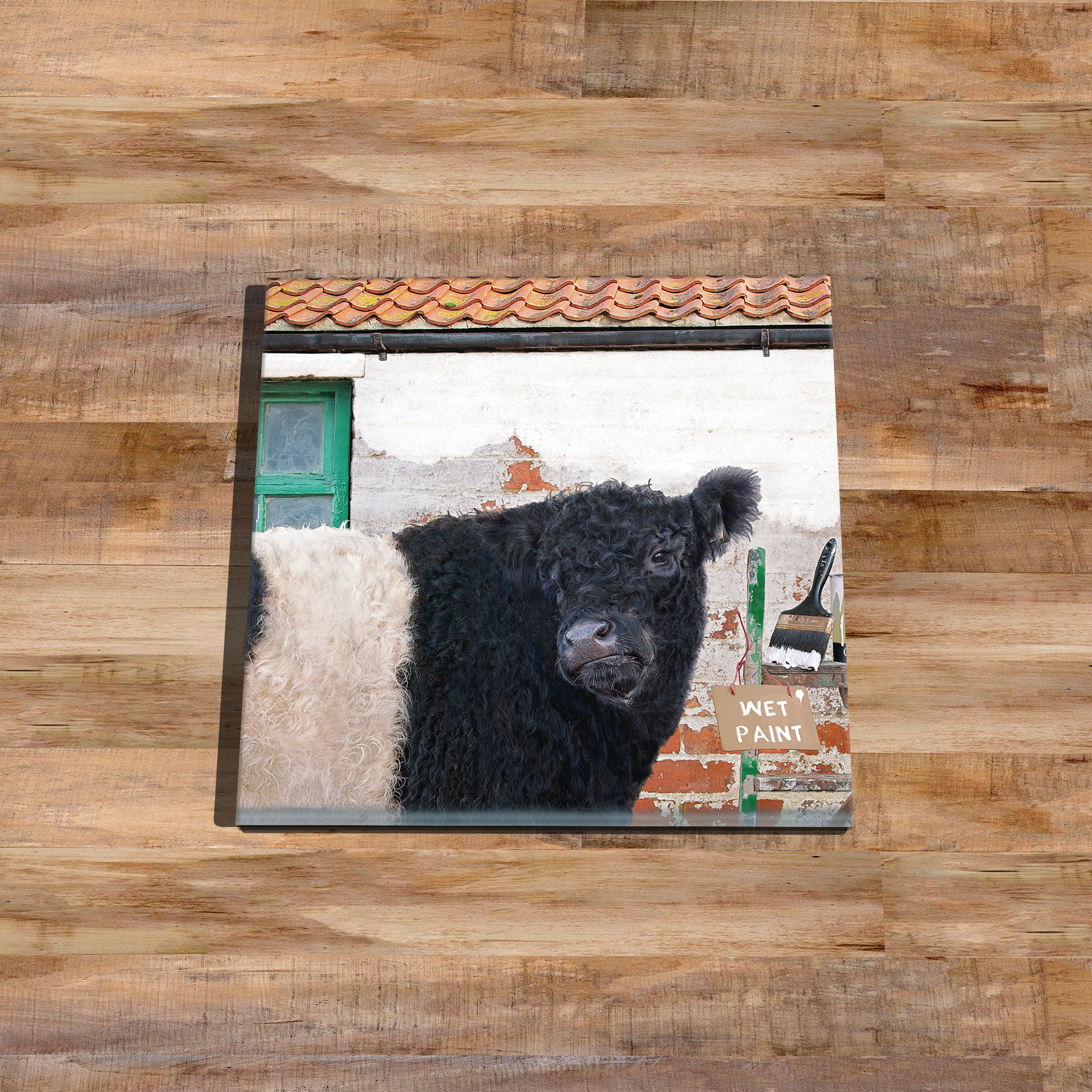 Belted Galloway Cow Coaster - Kitchy & Co