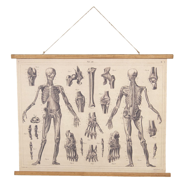 Opetustaulu Anatomia, Clayre & Eef