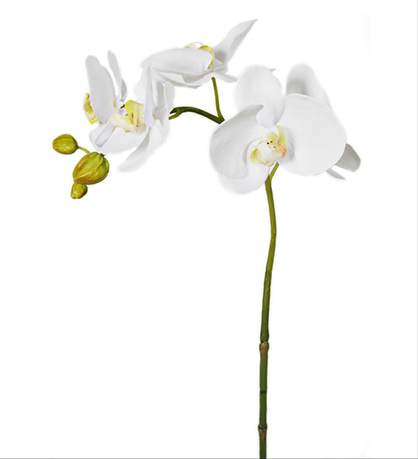 Orkidé, Gren