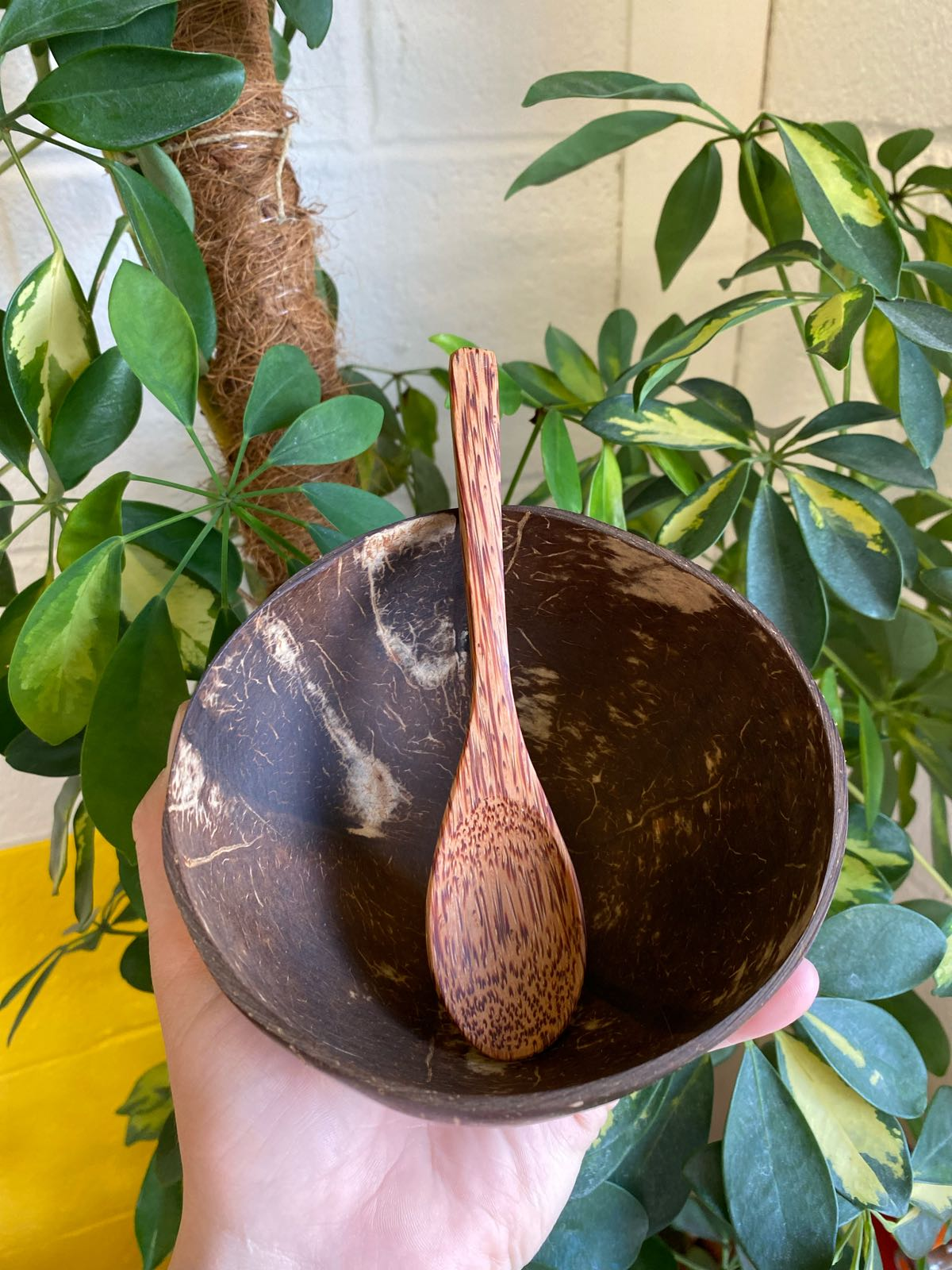 Coconut Spoon | Plastic Phobia