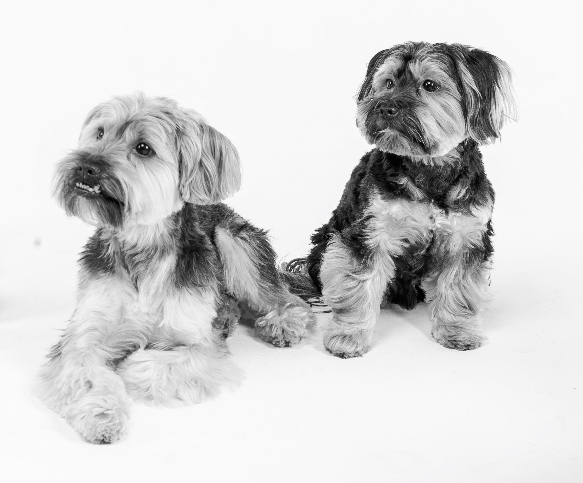Alfie & Bear