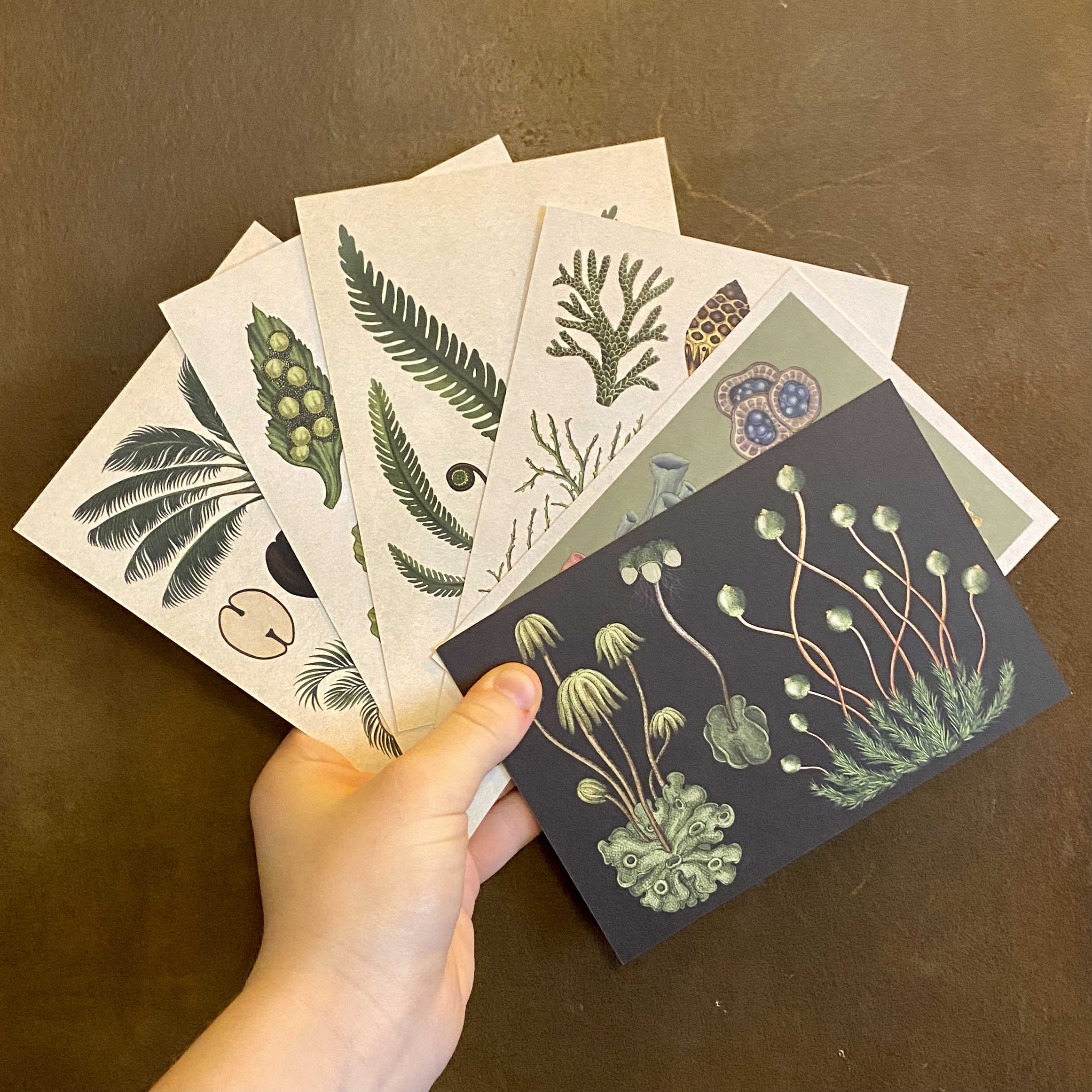 Botanicum Box Set of 50 Postcards