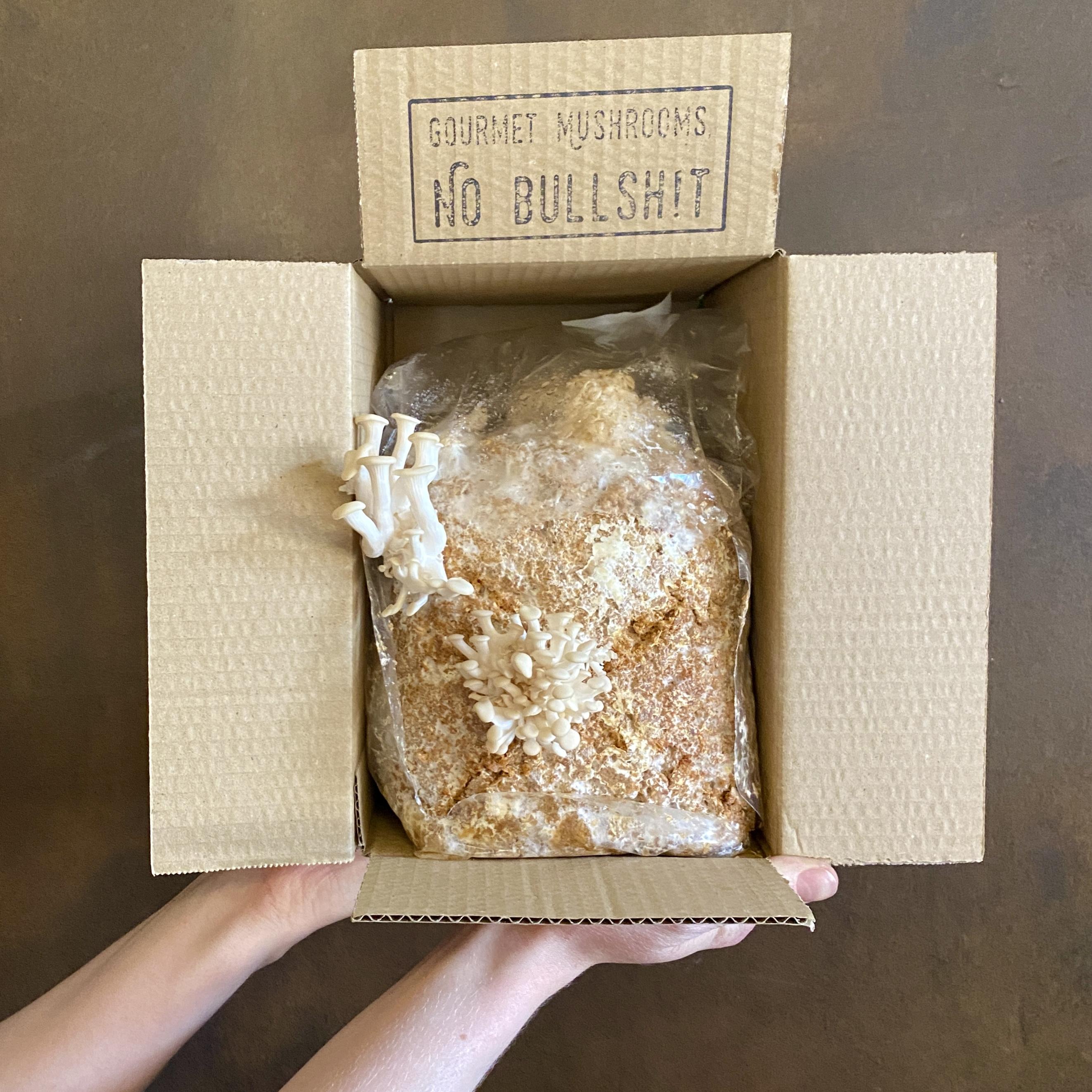 Grow Your Own Mushrooms Kit