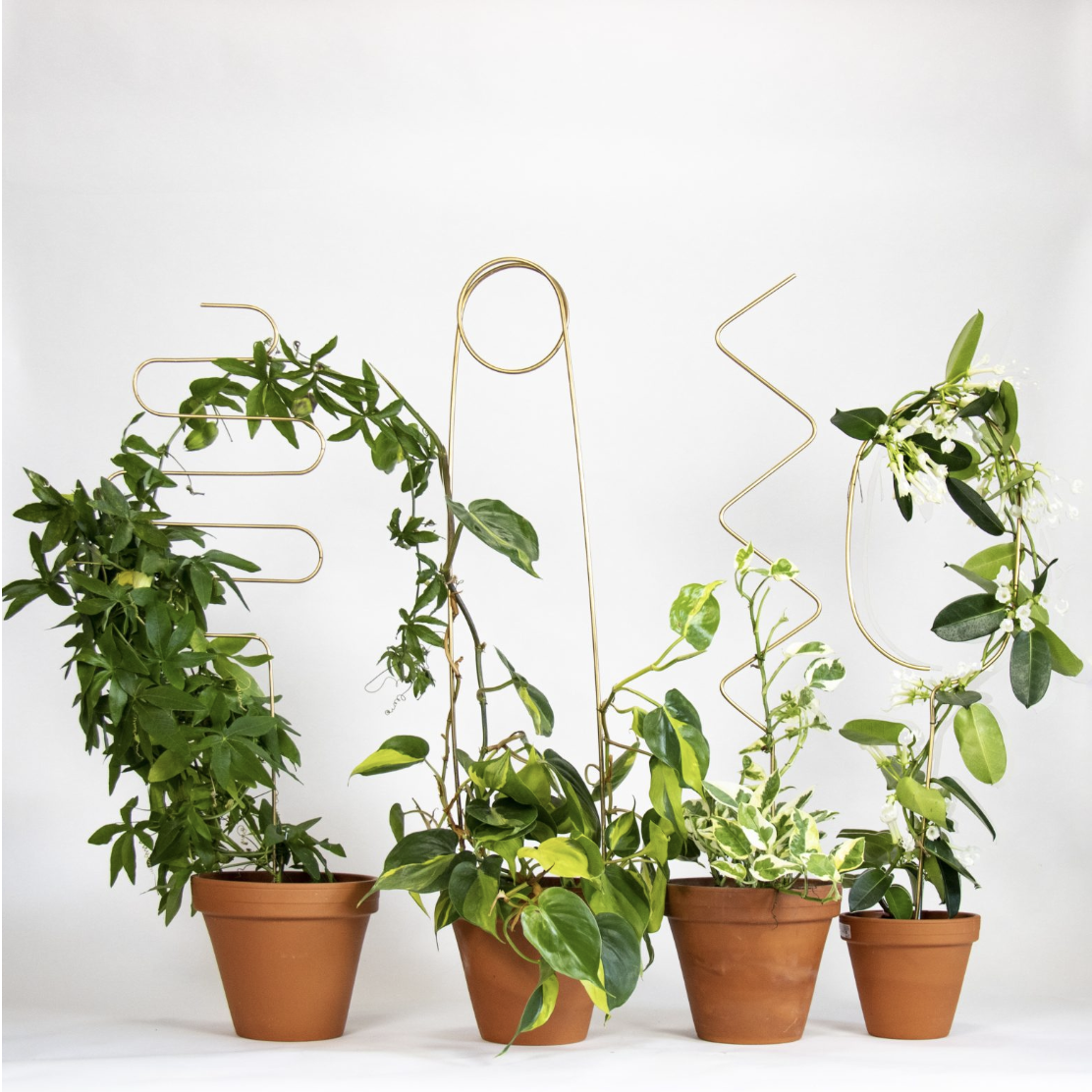 Brass Plant Stakes