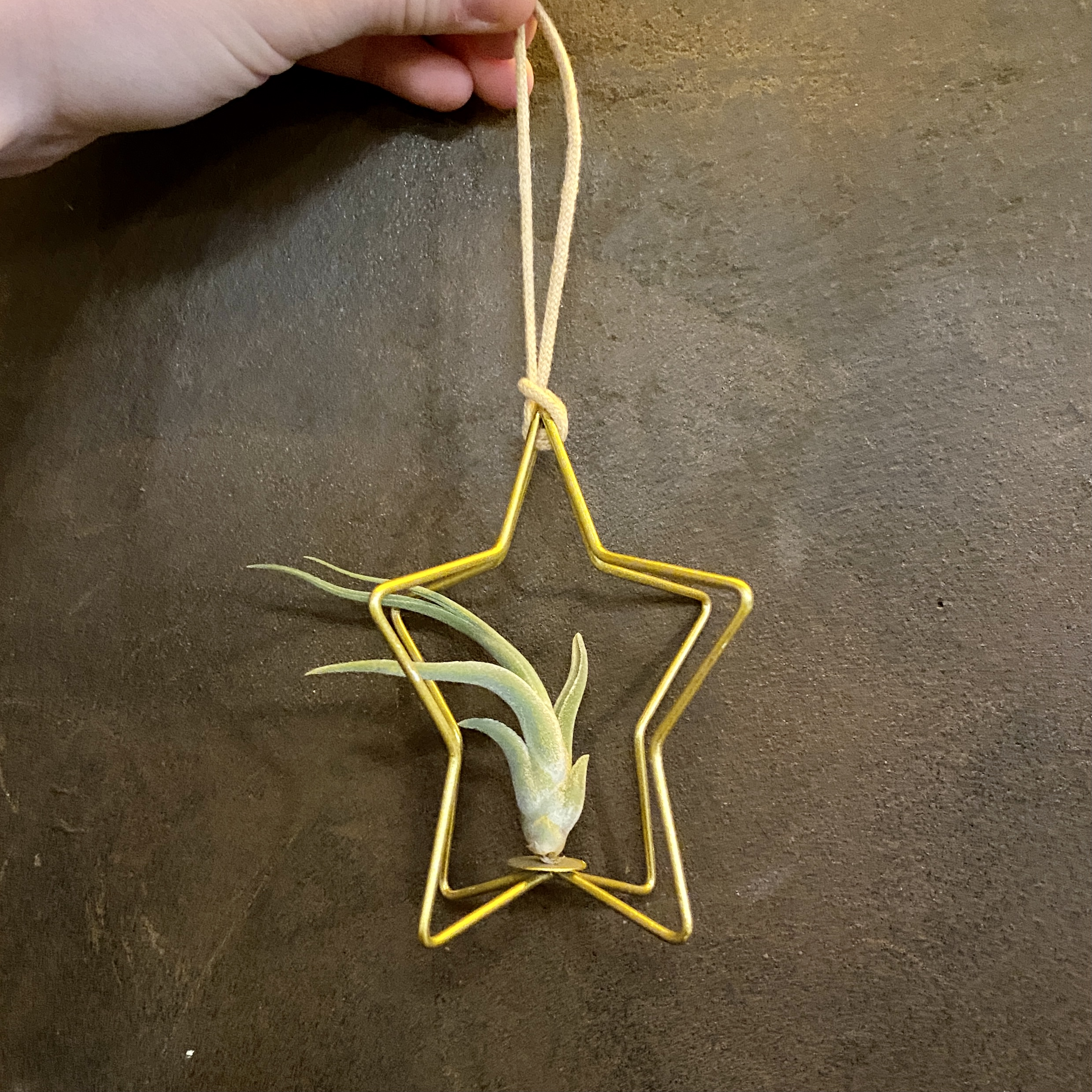Air Plant Christmas Ornament