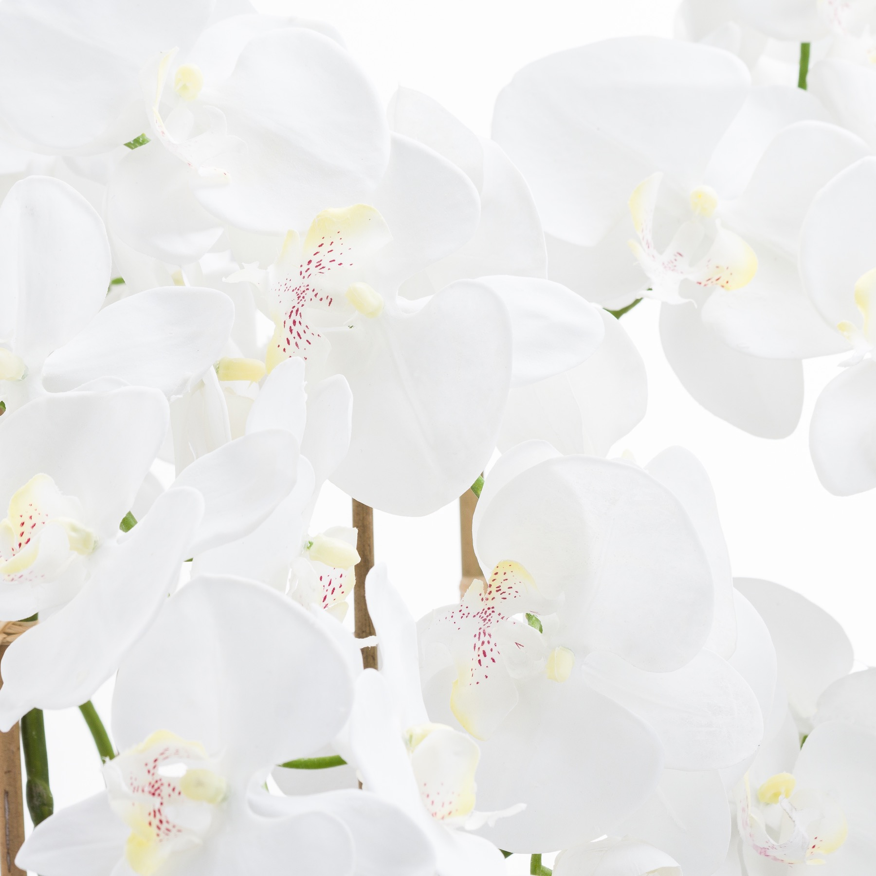 Large White Tall Orchid In Glass Pot by Hill Interiors