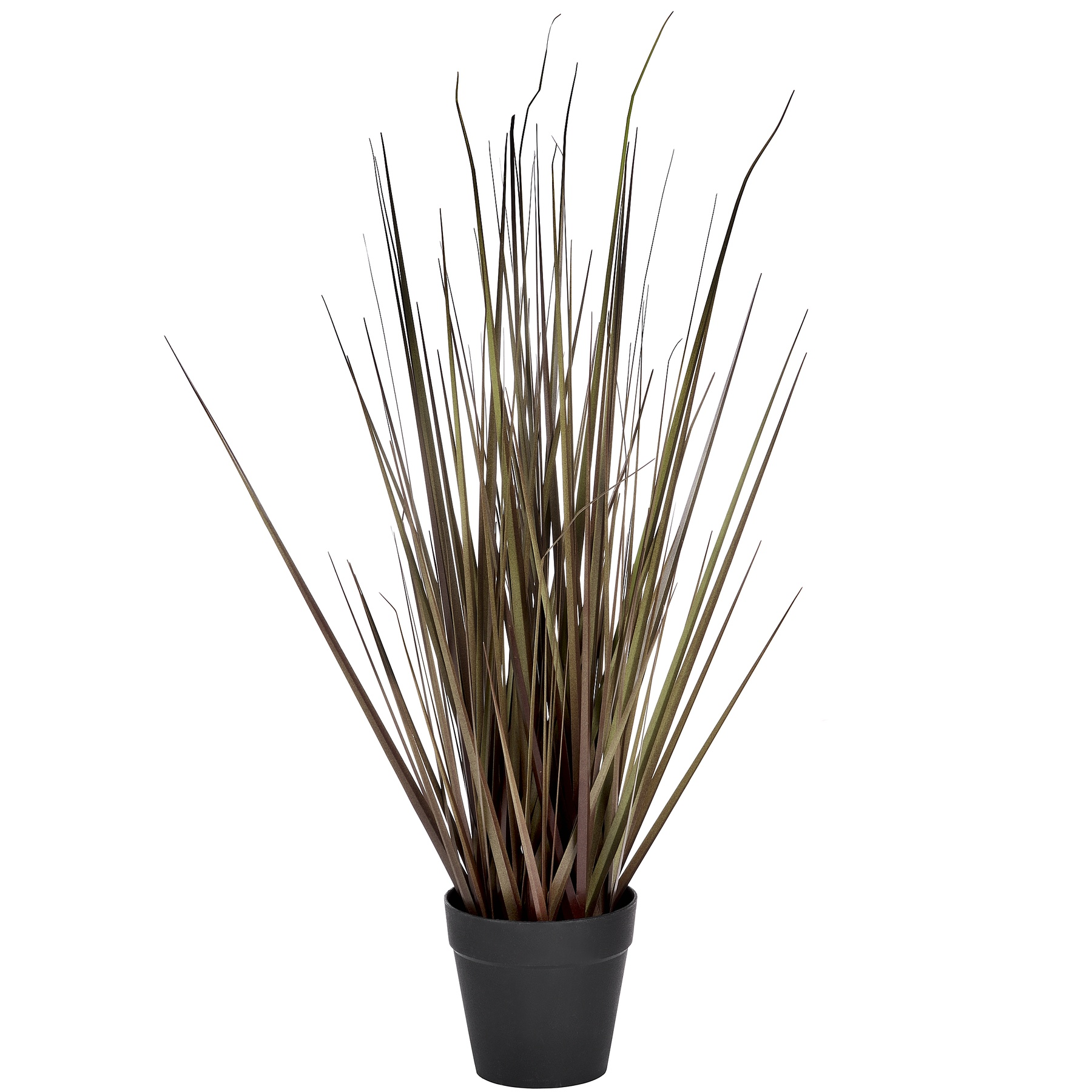 Spray Grass, 21 Inch