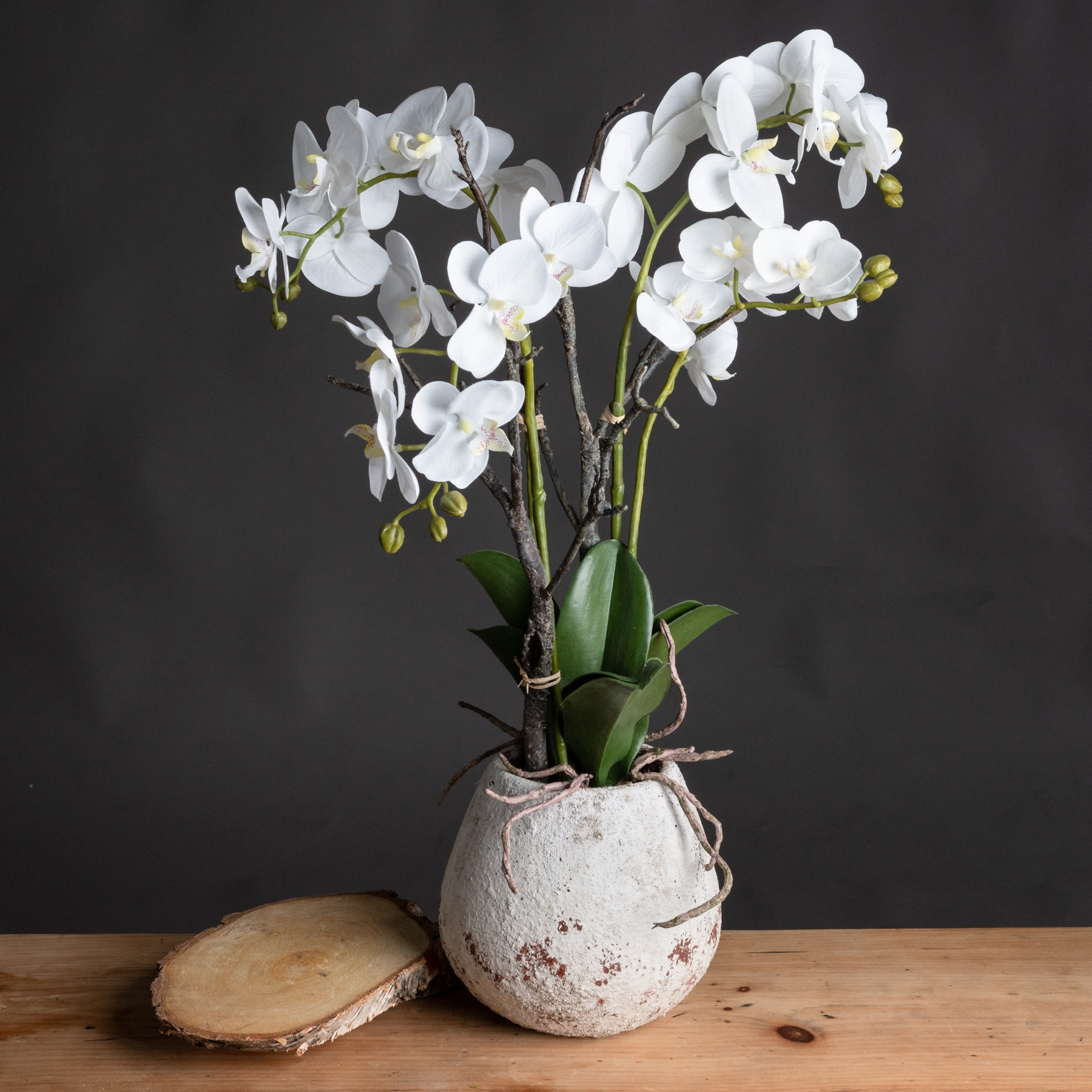 White Orchid In Stone Pot by Hill Interiors