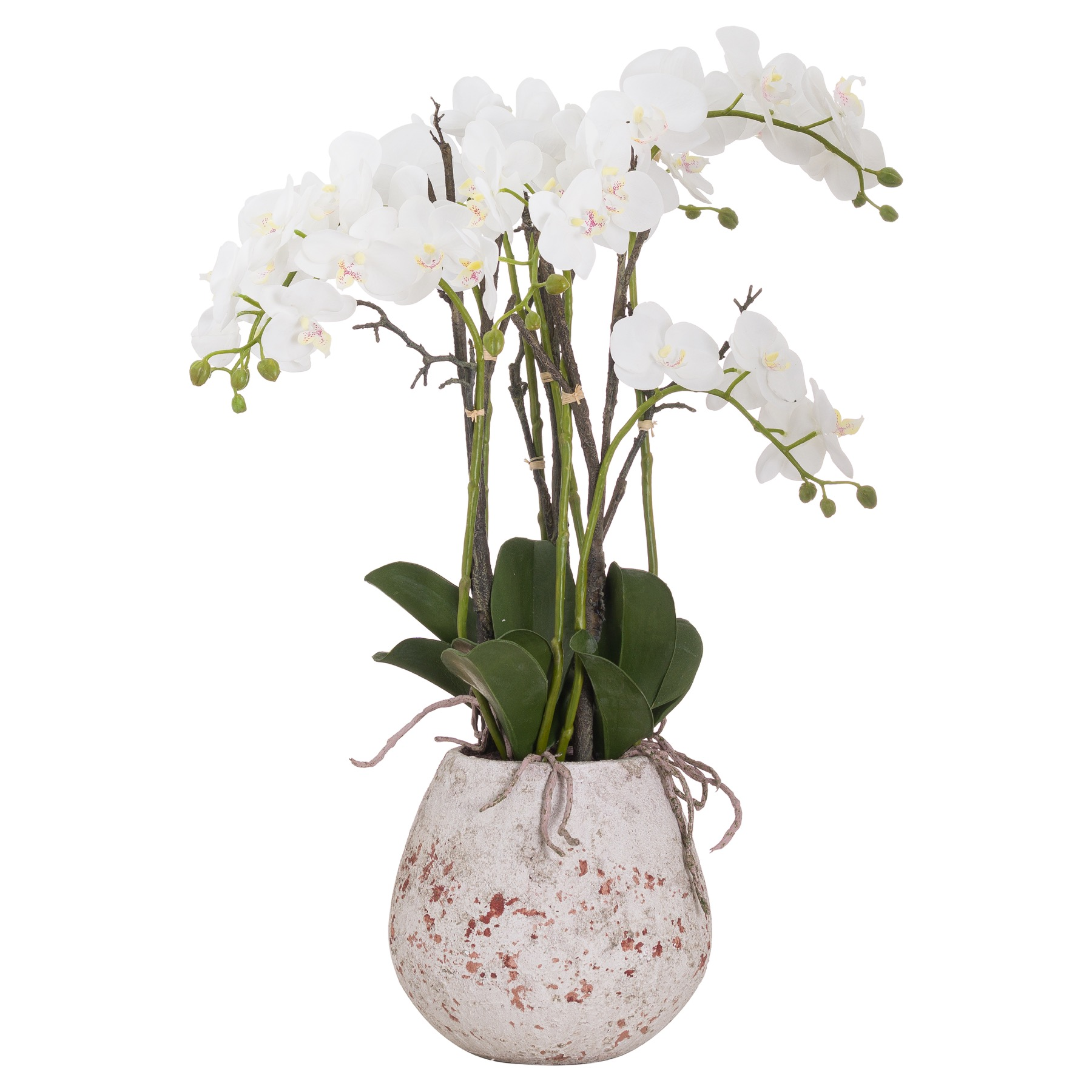 Large Stone Potted Orchid With Roots, Hill Interiors