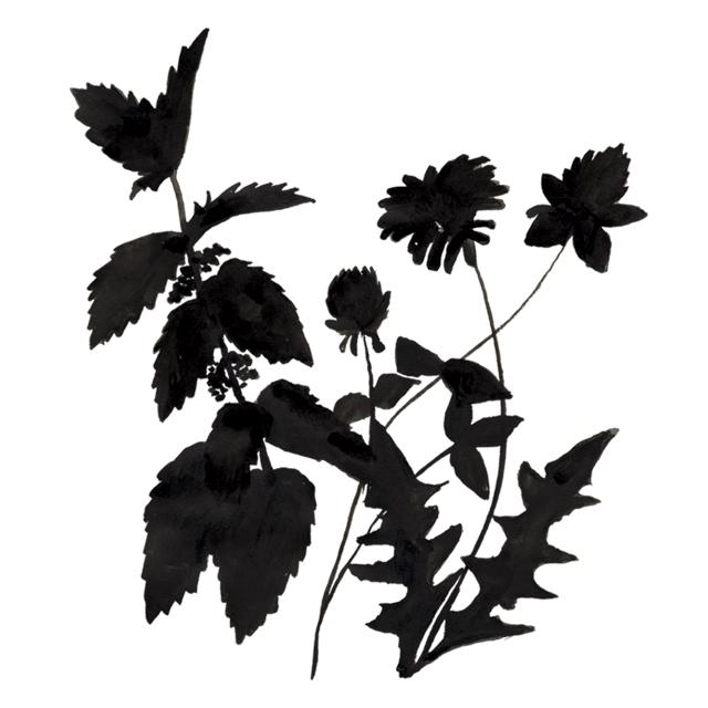 wilder botanics