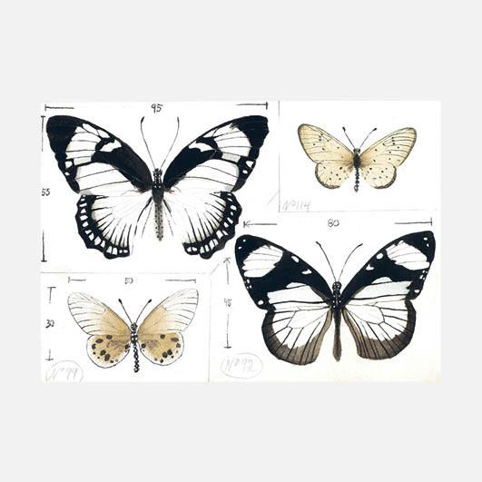 Morten Juvet - 154 sommerfugler og minst ett nattfly