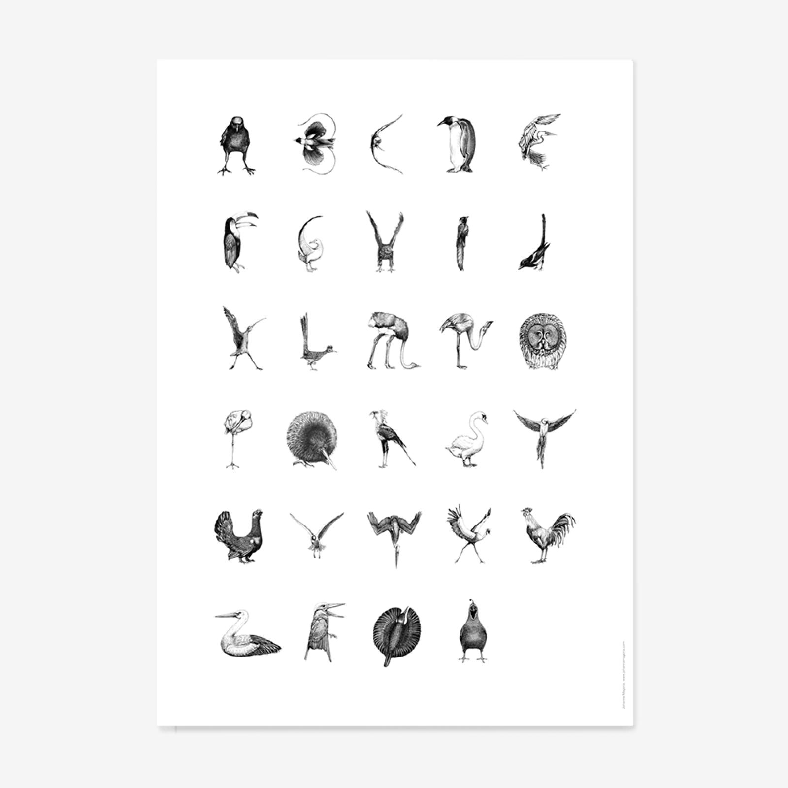 ABC Poster Bird Alphabet