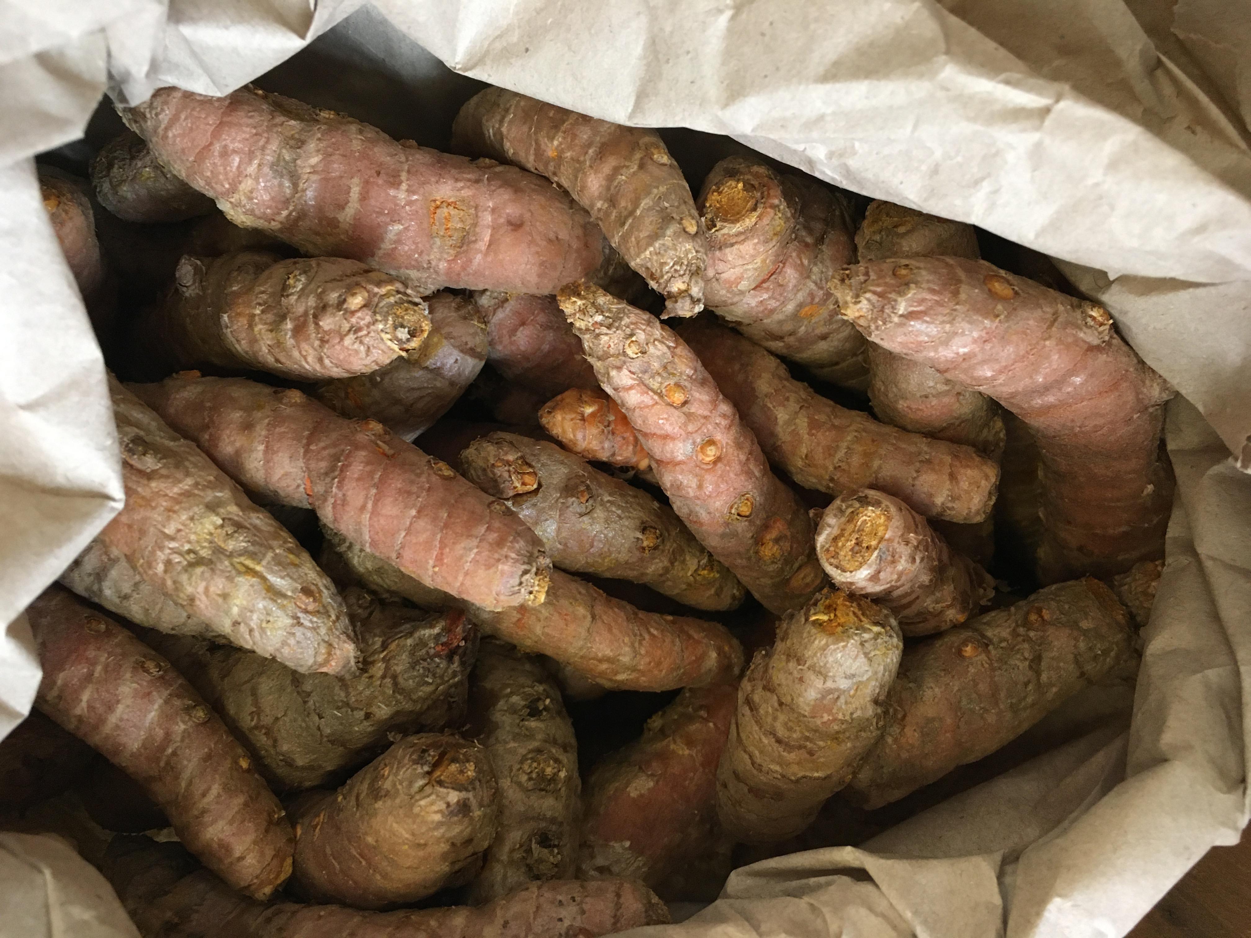 Organic Fresh Root Turmeric