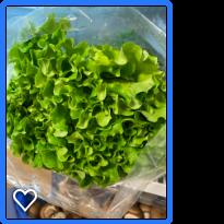 Organic Green Lettuce
