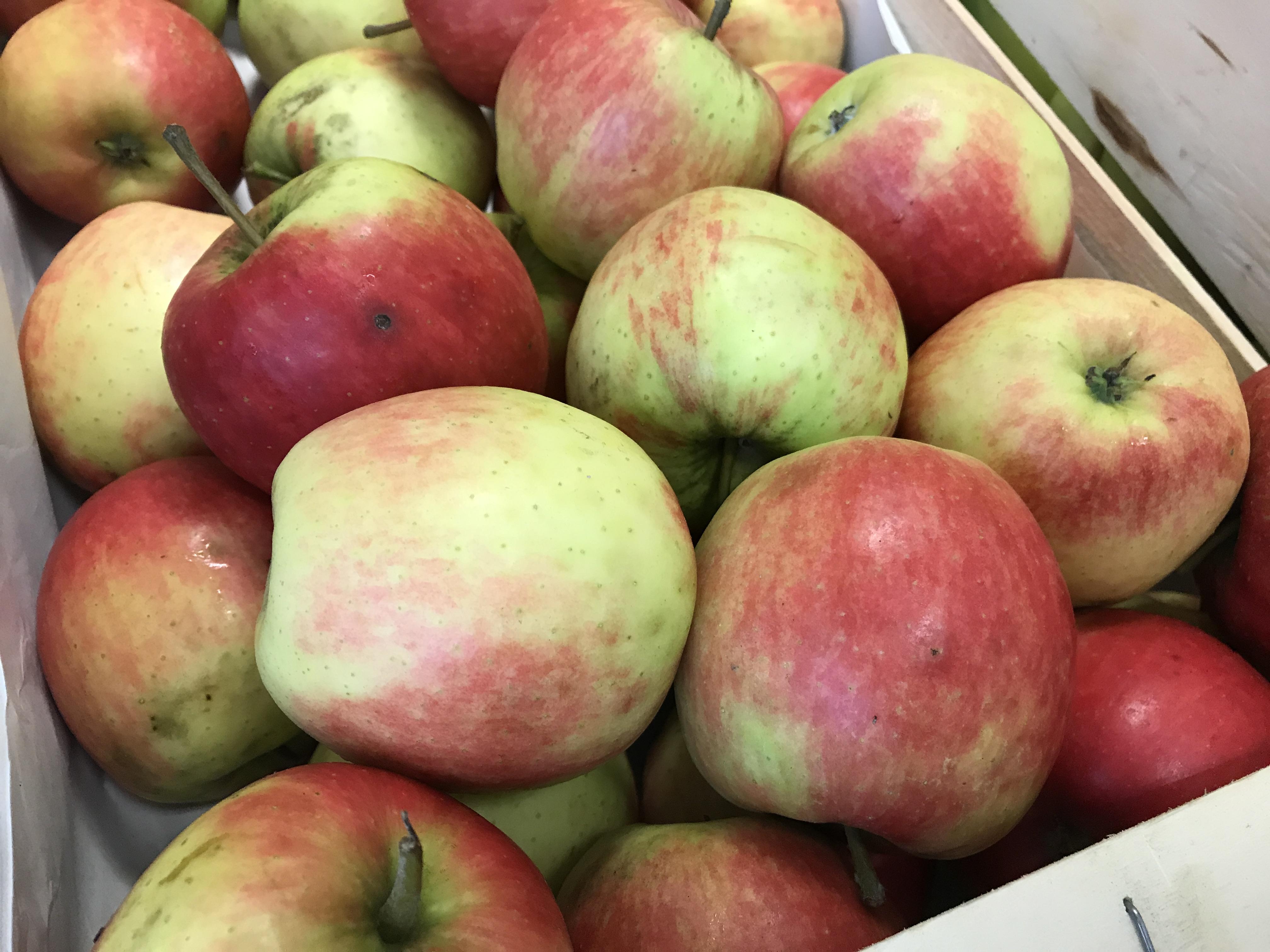 Organic Apple - Falstaff (REDUCED)