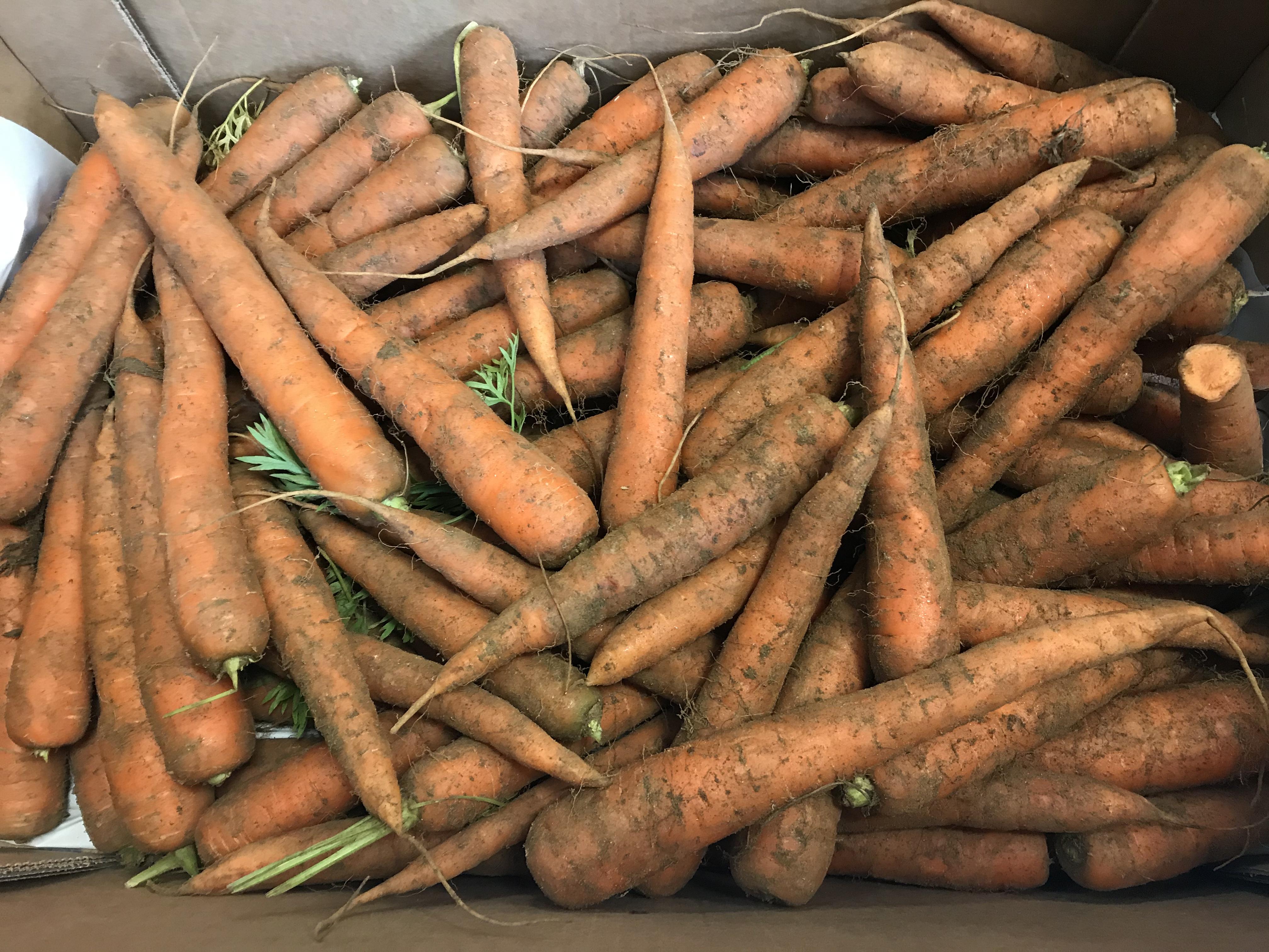 Organic British Carrots