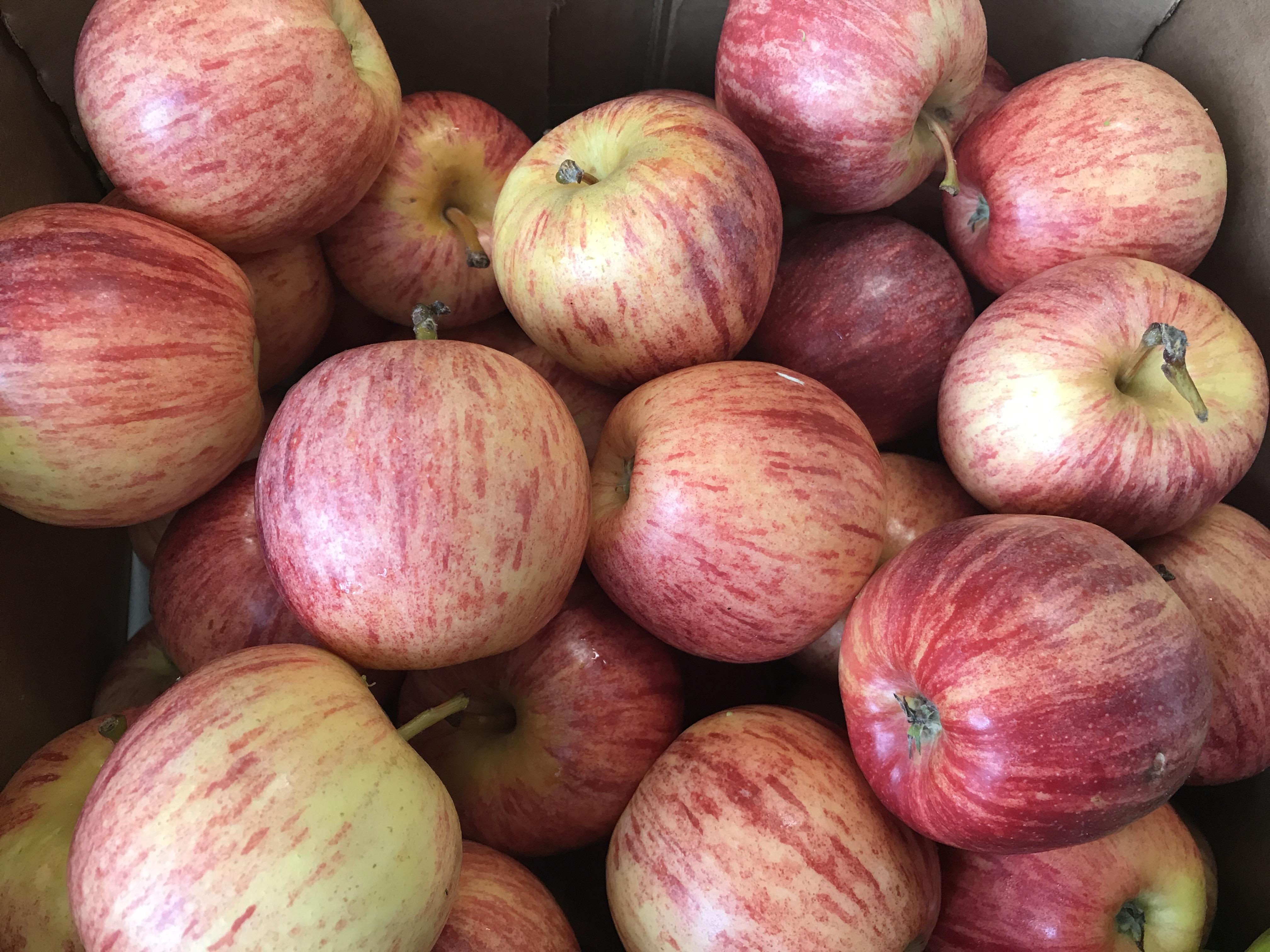 Organic Apples - Braeburn