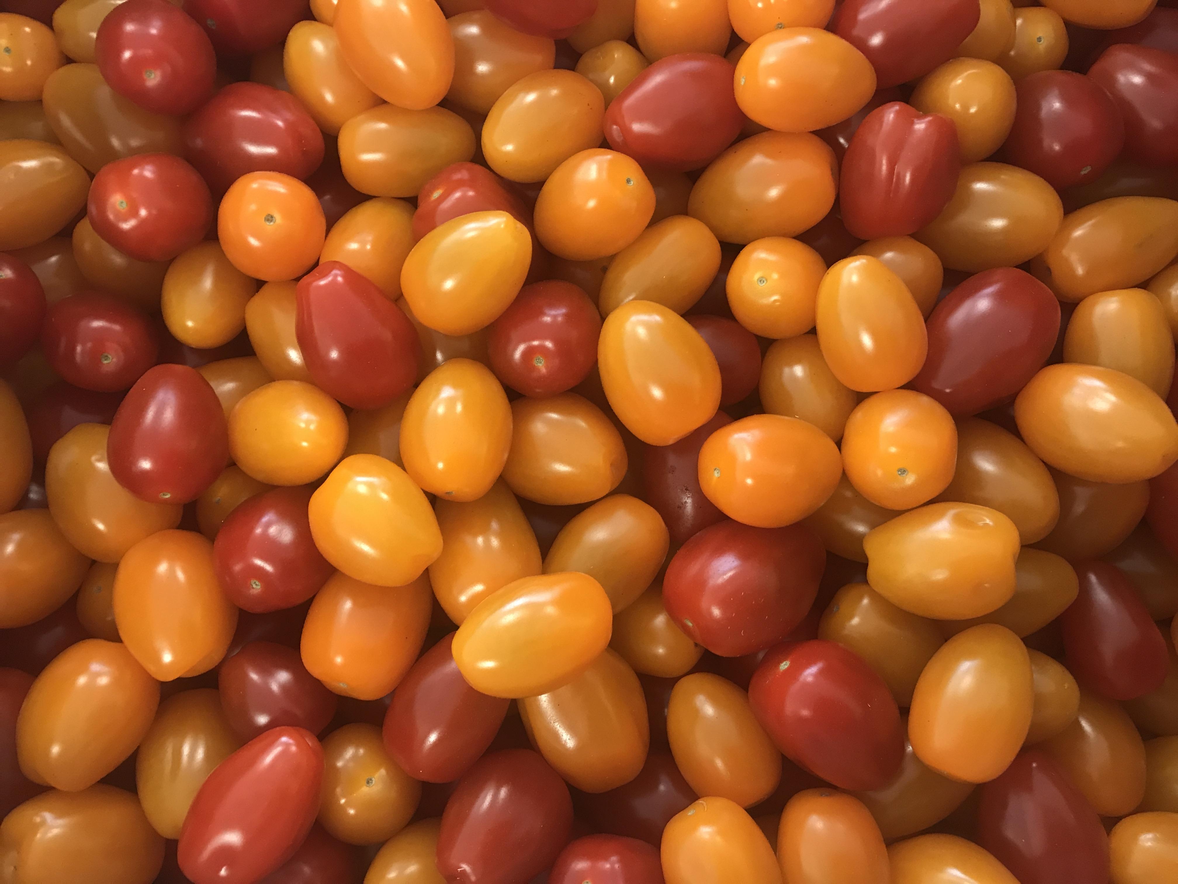 Organic Mixed Mini Plum Tomatoes
