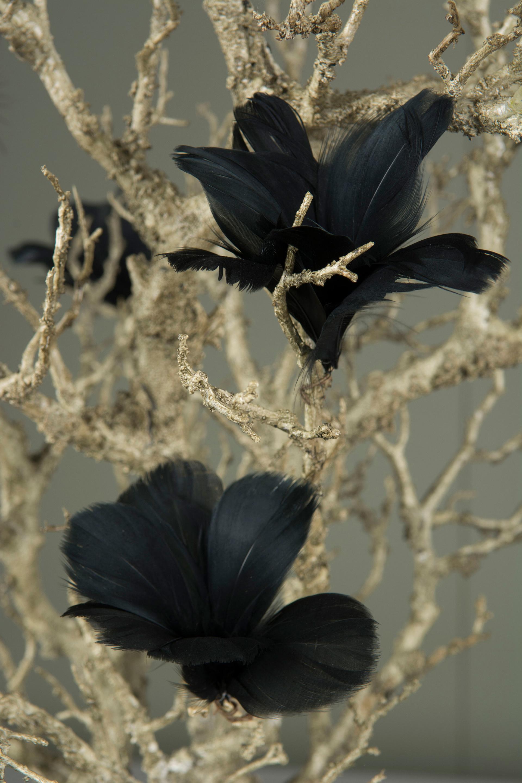 FJÄDERBLOMMA 12-pack svart