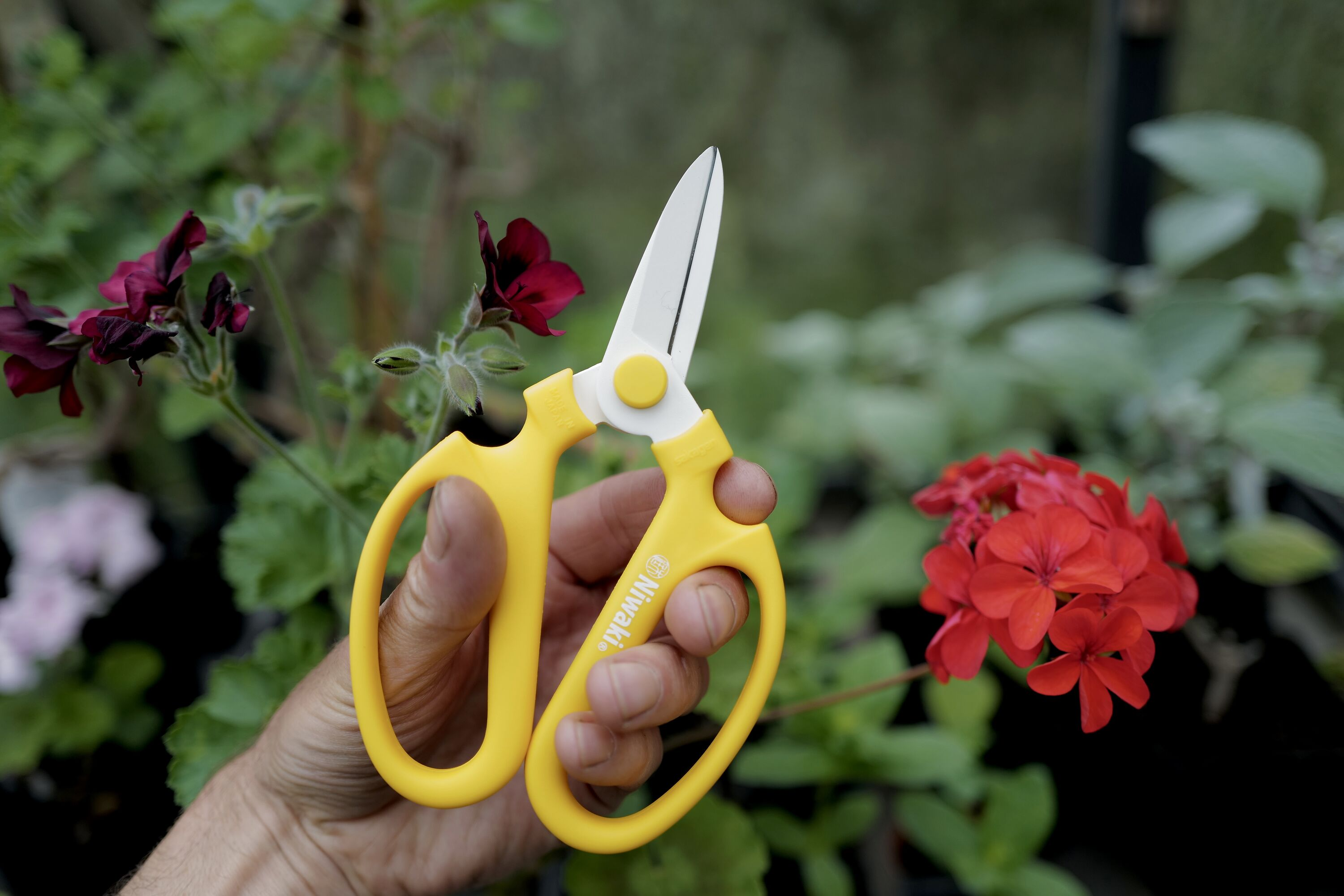 Niwaki x Sakagen Flower Scissors