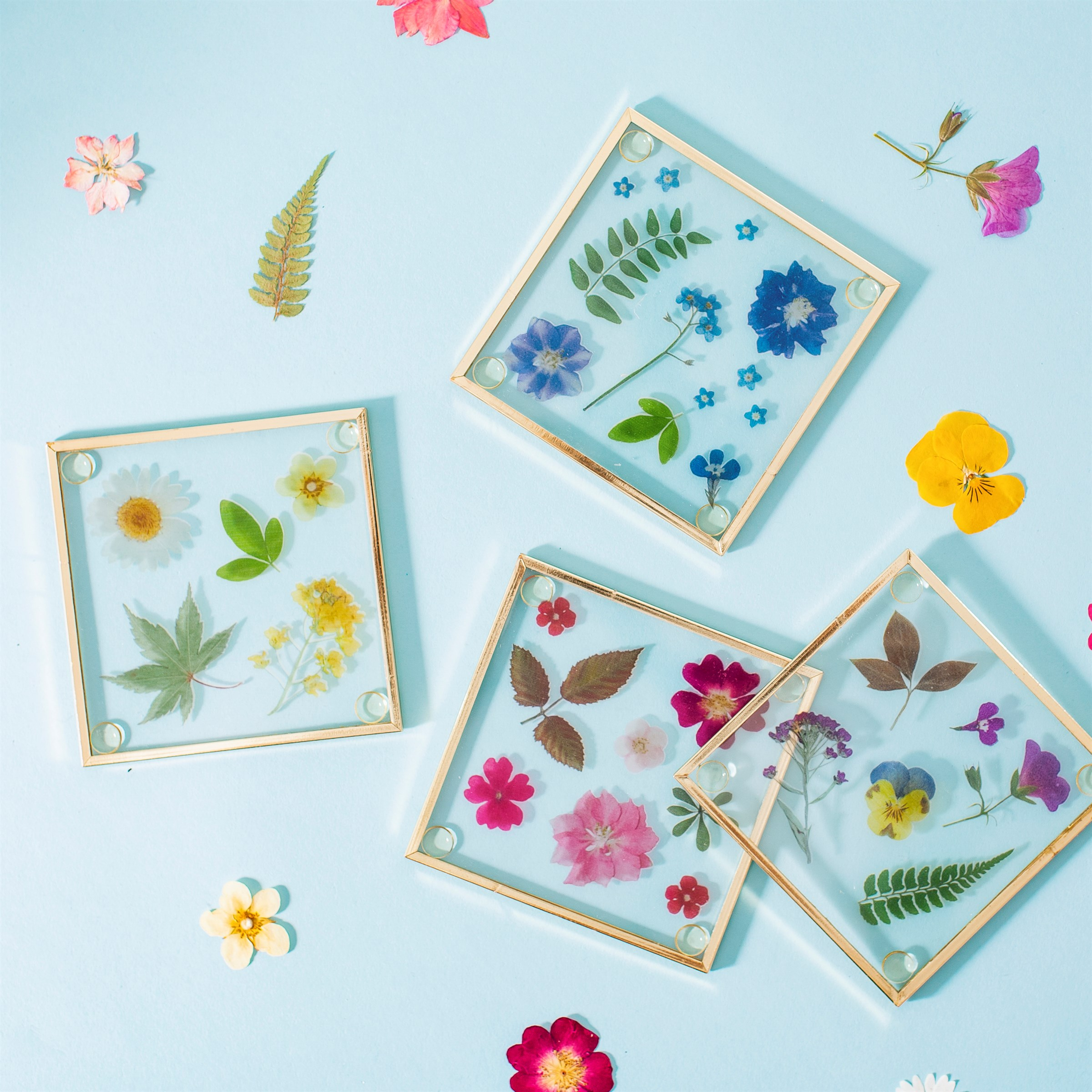Pressed flower glass coasters by sass & belle