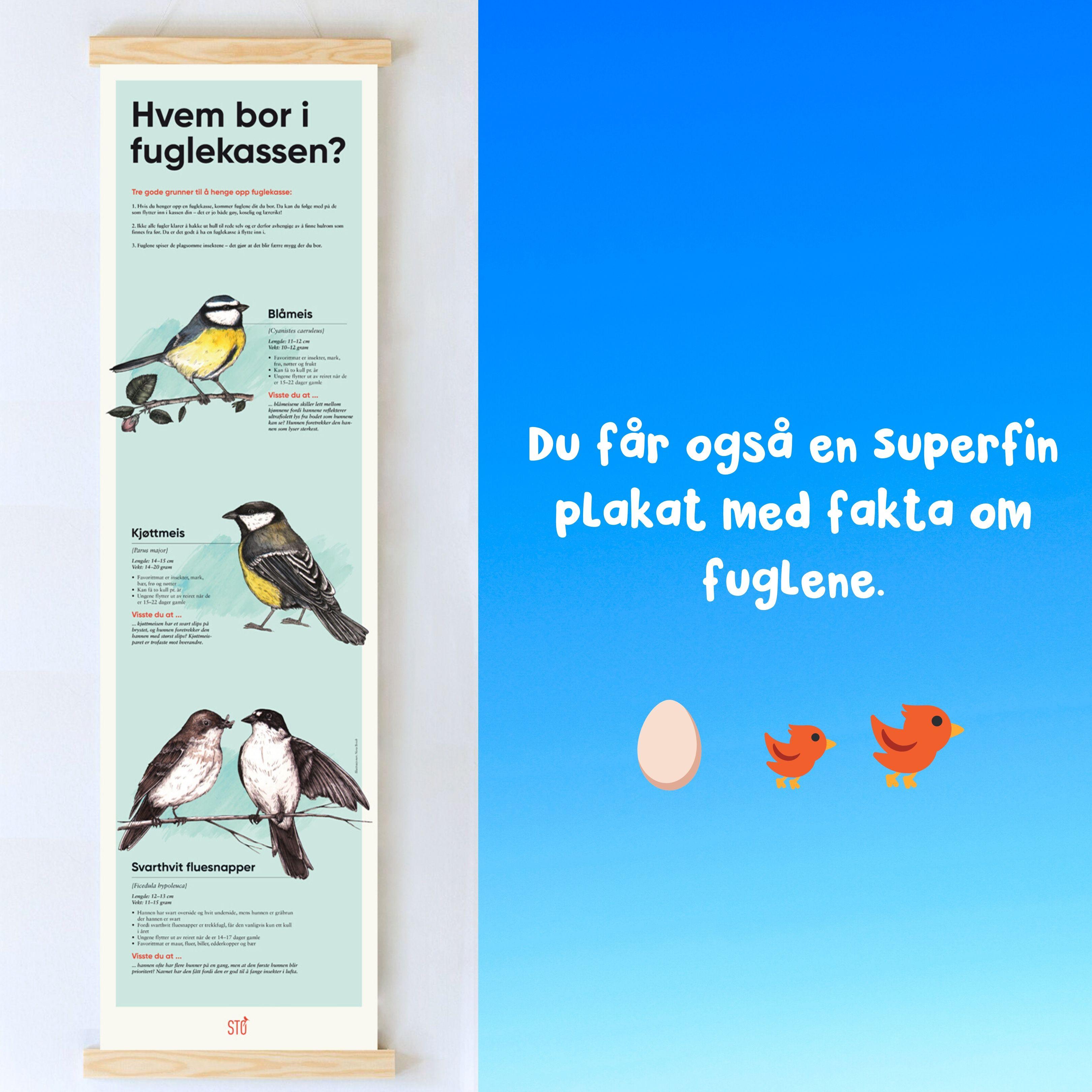 Stø Fuglekasse