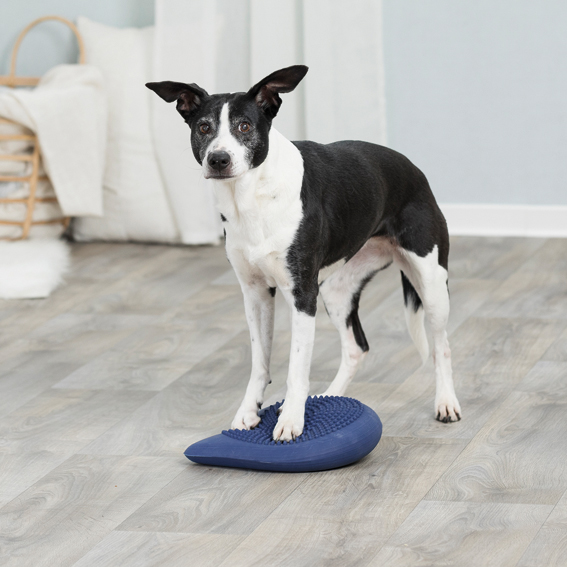 Dog Activity Balansdyna