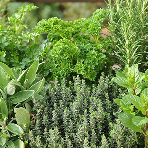 Small Mixed Herb Box