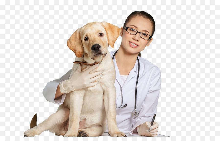 Veterinaria Royal Pet