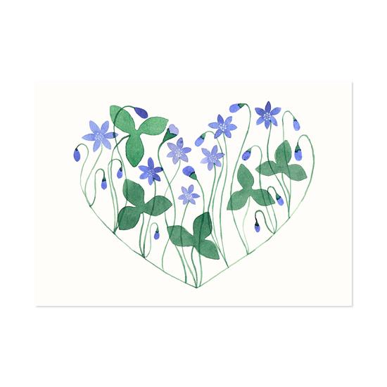 Sinivuokkosydän postikortti - Polka paper