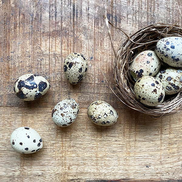PACK OF 60 BLOWN QUAIL EGGS DECORATIVE