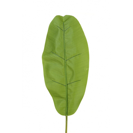 0778 Large banana leaf