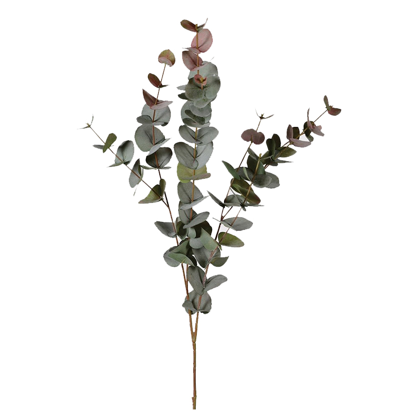 1441 Large eucalyptus stem
