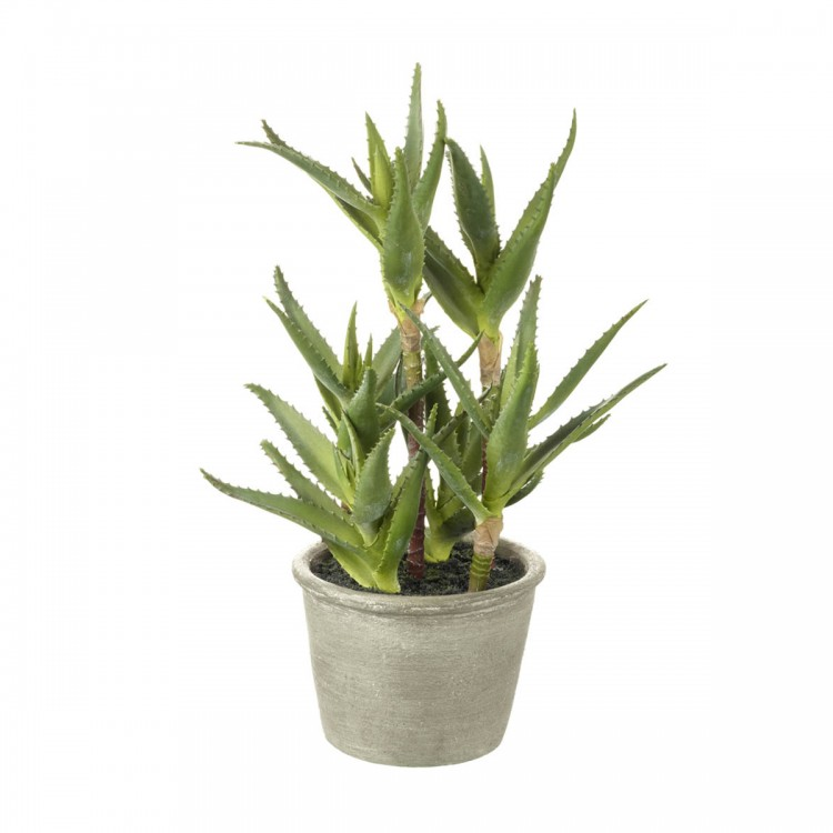 1392 Potted aloe plant