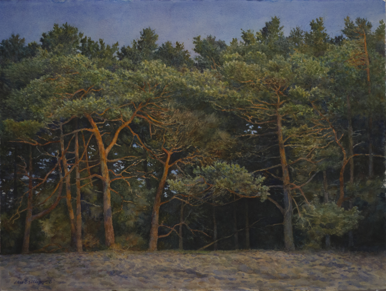 Lars Östling - Tallskog, akvarell